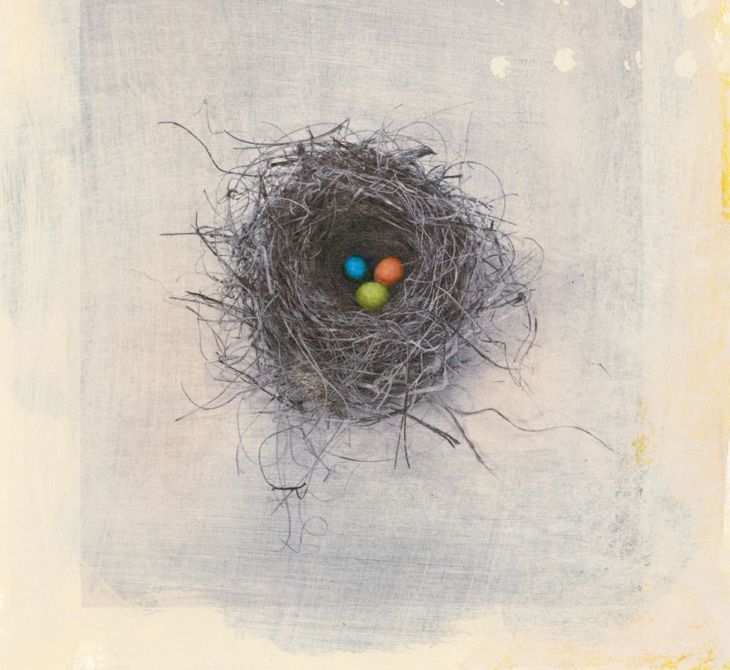 nest_000002097338_colorized.jpg